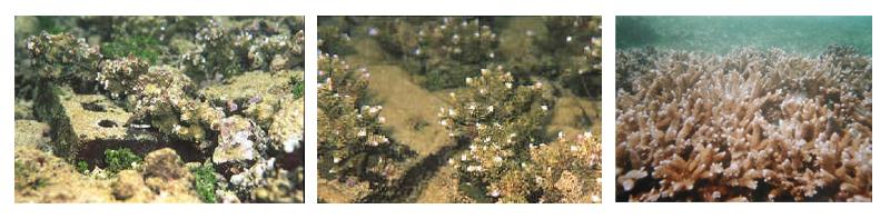 coralsave