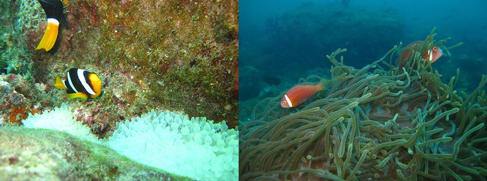 coralbayrock